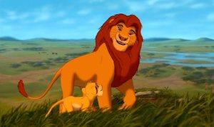 D'autres lions, pour comparaison.