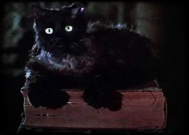 Le chat de l'Apprentie Sorcière