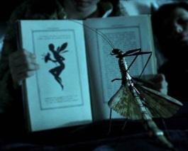 Ofélia montrant une illustration de fée à l'insecte.