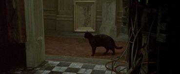 C'est drôle, tout ça me donne comme une impression de chat noir.