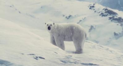 Un ours polaire sur la crète d'une montage regardant avec curiosité les deux enfants sortir des vestiges du train.