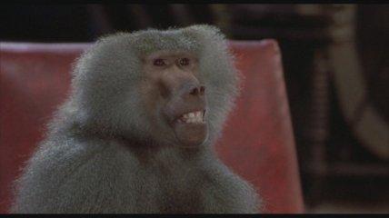 Un des macaques sur lequel Seth fait ses essais.